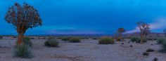 Panorama van de Kalahari woestijn tijdens het blauwe ochtenduur, Namibië