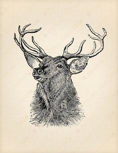 STAG head DEER Antlers Digital Graphics Image by ProjectPrintable