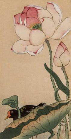 "Japanese Art Print ""Lotus and Rail"" by Ohara Koson, woodblock print reproduction, fine art, asian ar Lotus Kunst, Lotus Art, Ohara Koson, Lotus Painting, Art Asiatique, Japanese Painting, Japanese Prints, Japan Art, Art And Illustration"