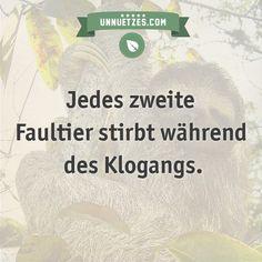 Darum kommt das Dreifinger-Faultier trotz der Gefahr zum Klogehen vom Baum: http://www.unnuetzes.com/wissen/10463/faultier/