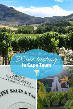 Wine tasting from Cape Town! Visit the oldest vinyard in South Africa/Suid-Afrika: Groot Constantia. You'll be in good company: Napoleon and Jane Austen loved this wine! Sauvignon Blanc, Cabernet Sauvignon, Places To Travel, Places To Go, Chobe National Park, Wine Tasting Experience, Visit Victoria, San Francisco Travel, Out Of Africa