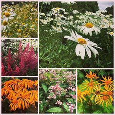 A few photos of the beautiful flowers in the #gardens of Falkland #Palace that I visited today #inspiration #interiors #curtains #nature #flowers