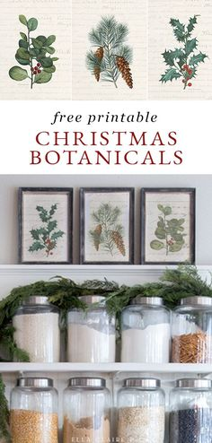 These free printable vintage Christmas botanicals are so cute to decorate your home for the holidays! Pinecones, Holly and greenery are such a classic combination in these budget friendly, cheap prints!