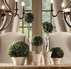 boxwood topiaries - love preserved boxwood. Must learn how to do this.