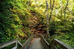 Ada-hi Falls - Black Rock Mountain State Park Weekend Trips, Day Trip, Blackrock Mountain, Waterfalls In Georgia, Mill Falls, Gorges State Park, Cascade Falls, Autumn Lake, Mountain States