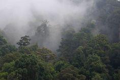 Taman Negara National Park, Malaysia. © Renaud Fulconis