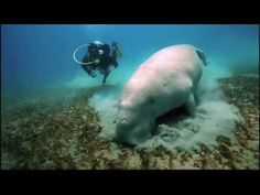 http://freedom-divers.com Scuba Diving the Andaman Islands with Freedom Divers