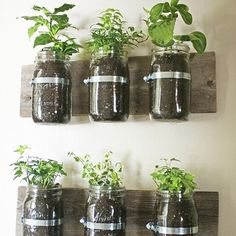 Mason Jar Planter - Wondering what to do with those old mason jars? Instead of throwing away your dollars on fresh herbs, plant your very own! | 12 Hacks to Create Your Dream Apartment - Buzzfeed.com