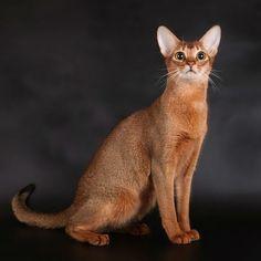 Особенности характера кошек