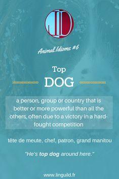 """Animal idiom: """"Top dog"""" 🐶 #EnAvantAnglais #EnglishIdioms #Idioms #Anglais #ApprendreAnglais LinguiLD /Idioms/ (Design by LinguiLD)"""