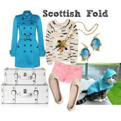 Scottish Fold - I'm just really amused that someone designed an outfit around a cat...