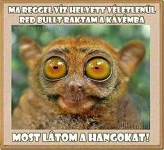Forget wings I wanna see sounds! Animals bat meme coffee lol humor photos Redbull very funny animal Funny Animal Memes, Funny Animal Pictures, Funny Photos, Funny Animals, Funny Jokes, Funniest Pictures, Funny Images, Animal Humor, Animal Captions