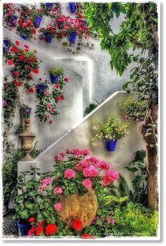 Patio Cordobs ~ Courtyard Patio Festival, Cordoba, Spain ~ by Lui G. Marn