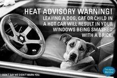 Heat Advisory Warning: leaving a dog, cat or child in a hot car will result in windows being smashed with a brick. Dog Car, Veterinary Technician, Animal Rights, Mans Best Friend, Pet Care, Animal Rescue, Animal Adoption, Puppy Love, Fur Babies