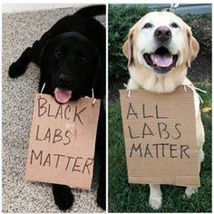 Black Labs Matter - All Labs Matter