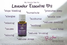 Everyday Oils:  Lavender Essential Oil
