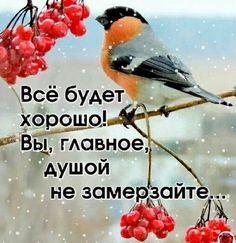 Bird, Humor, Winter, Happy, Quotes, Animals, Ceramics, Good Morning, Winter Time