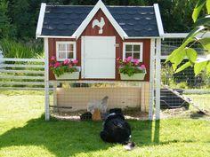 Mein hühnerhaus