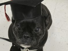 It only took 4 years, but Cleo finally graduates from puppy K!