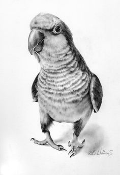 Bird Drawing Pencil Drawing Giclee Fine Art