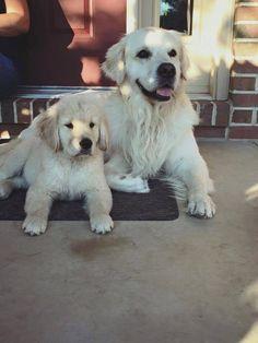 Golden friends <3