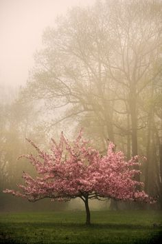 Pink cherry pops from the fog.