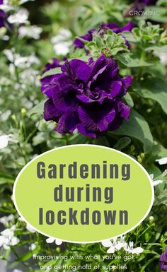 Gardening during lockdown: how to improvise with what you've already got, plus UK online gardening retailers that are still despatching orders. Planting Bulbs, Planting Seeds, Planting Flowers, Gardening Supplies, Gardening Tips, Easy Garden, Garden Ideas, Garden Power Tools, Kids Sand