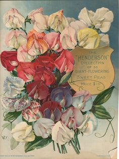 Sweet Peas ~ vintage seed packet, 1905