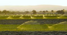 FARMERS CAN RECEIVE GRANTS TO MOVE TO ORGANIC FARMING Transition will ditch GMOs and toxic chemicals