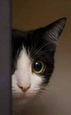 Reminds me of my kitty when playing peek-a-boo.