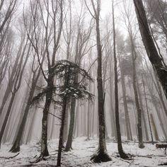 Neve in Campigna - Instagram by portalemeteoemiliaromagna