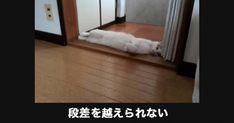【腹筋破裂】ジュースを飲みながら見てはいけない猫の傑作大喜利18選