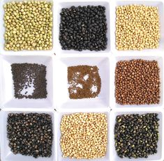 Natural Health Perspectives: Seed Cycling For Natural Hormonal Balance