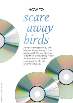 Bird scare tape rainbow 500 39 roll at www groworganic for How to scare animals away from garden