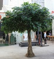 Source factory price life size artificial ficus trees, large outdoor artificial pine trees, cheap 2015 large size banyan ficus tree on m.alibaba.com Artificial Plants And Trees, 3d Tree, Ficus Tree, Pine Tree, Leaves, Reception Ideas, Classroom Ideas, Indoor, Crafts