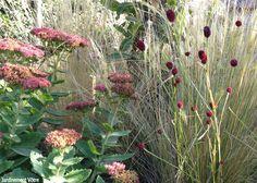 jardinement votre      Sanguisorba officinalis 'Tanna' (en compagnie du sedum 'Automn Joy' et de stipa tenuifolia)