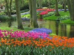 #jardin de #Keukenhof en #Hollande : des #tulipes #multicolores