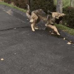 """Share this """"Dog tries to stop stream of water"""" animated gif image with everyone. Gif4Share is best source of Funny GIFs, Cats GIFs, Dog GIFs to Share on social networks and chat."""