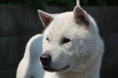 Kishu Ken from Kishu Yoshitaka Sou  [写真/嶺城号]