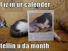 PHOTO LOVECAT: How to Schedule Appointments Faster