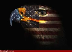Beautiful American Bald Eagle & US Flag