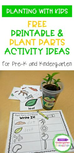 Who doesn't love planting with kids! Teachers (or parents) and kids will have tons of fun with this planting project and learning more about plants. Plant science is one of the earliest types of science that children can understand, so this is a perfect spring STEM activity, suitable for both PreK or Kindergarten classroom! Take a look at our plant parts activity ideas and grab a FREE printable! Spring Activities, Science Activities, Types Of Science, Kindergarten Stem, Preschool Garden, Plant Projects, Plant Science, Parts Of A Plant, Free Education