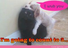 : O  Puppeh wants hugz. Kitteh wants REVENGE!