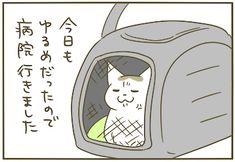続・ゆるめのシノさん | うちの猫がまた変なことしてる。【猫まんが】