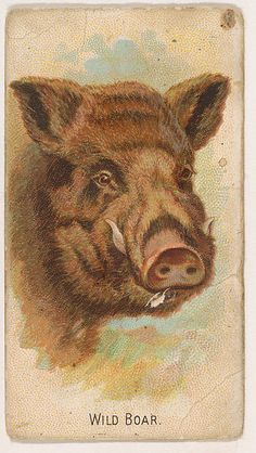 Inscription: Printed text on lower edge of card: Wild Boar.Printed text on verso of card: Wild Animals of the World/ One packed in each box of/ Cigarettes./ [checklist of all 50 animals included in series]/ Allen & Ginter/ Richmond - Virginia Wild Animals List, Zoo Animals, Wild Boar Hunting, Deer Hunting, Bear Pictures, Random Pictures, Birds Of America, Game Birds, My Spirit Animal