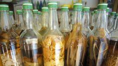 Le rhum réunionnais - La reine des boissons locales* est une tradition et se consomme sous plusieurs formes. Introduite en 1704, les musées, distilleries et autres coopératives agricoles racontent son histoire et les secrets de sa fabrication. *A consommer avec modération.