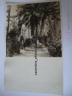 RARA TARJETA POSTAL FOTOGRAFICA ORIGINAL P.P.S.XX, ELCHE, ALICANTE, CA. 1910/20. LA250