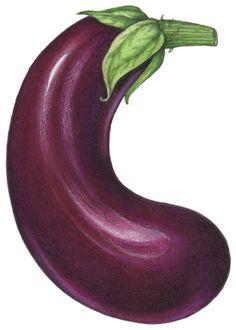Food illustration of a purple eggplant.