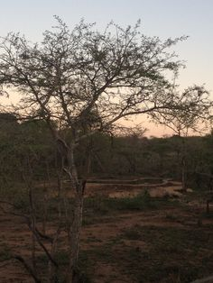 Panzi Bush Camp, Limpopo South Africa - September 2012