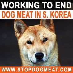 LCA founder and president is in S. Korea meeting with officials, supporting legislative efforts to strengthen animal protection laws. Please visit stopdogmeat.com to sign the petition for the dogs and cats of S. Korea.  #animalrights #animals #stopdogmeat #dogs #cats #southkorea #korea #seoul #dogmeattrade #soidog #namikim #koreandogs #savethem #savethemALL #STOPANIMALCRUELTY #lastchanceforanimals #animalrights #activism #activist #vegan #animals #fightforanimals